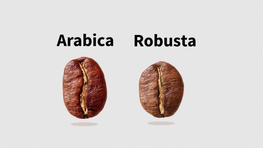 Arabica vagy Robusta? Melyik finomabb?